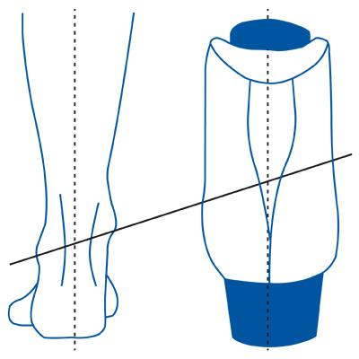 tomaia-anatomica